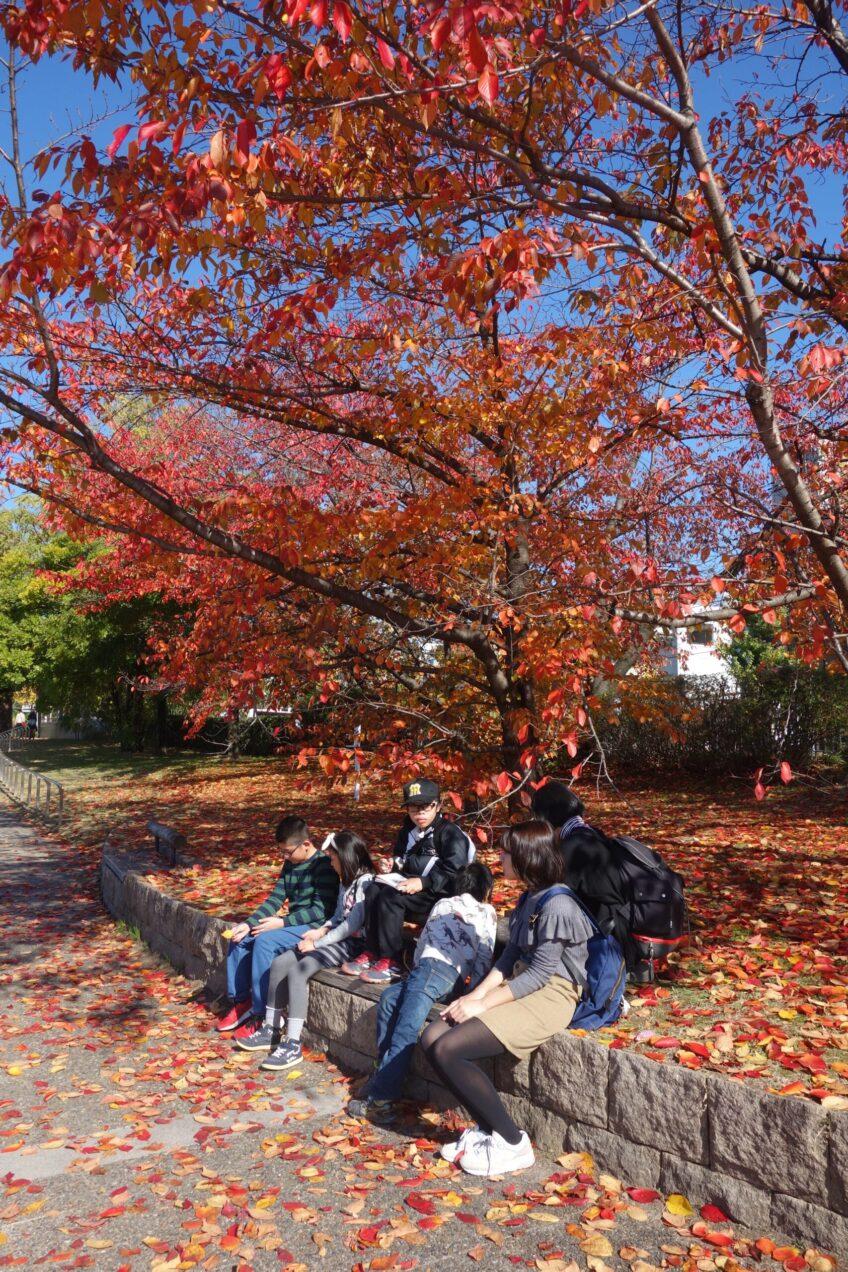 紅葉と探検